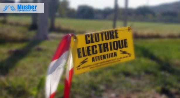 cloture-electrique-chien