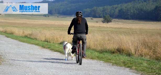 canivtt-velo-chien-route