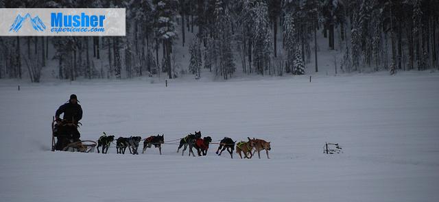 Chien de traineau à Jokkmokk, Suède février