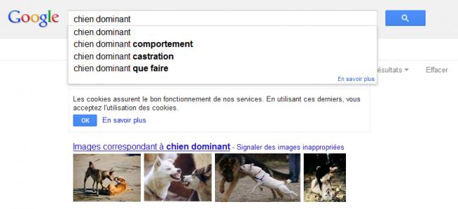 Chien dominant - recherche Google