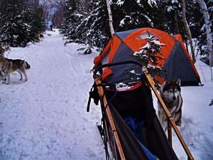 Chien de traineau et tente d'hiver