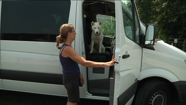 Husky blanc dans un van