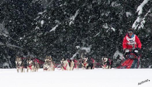 Copyright Olivier ANRIGO chiens de traineau -40