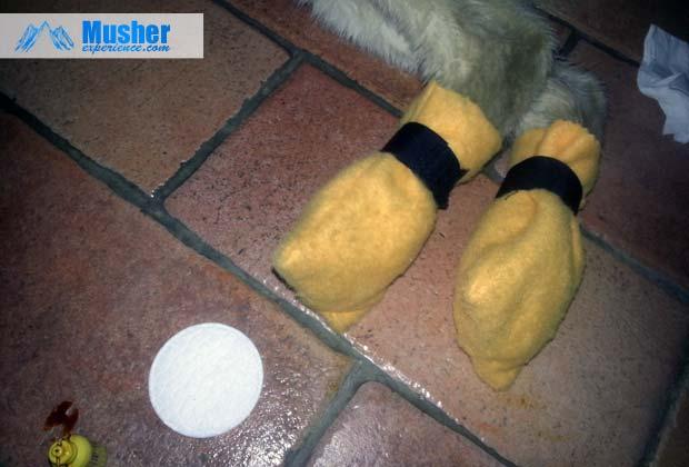 Bottines polaires pour protéger les pattes