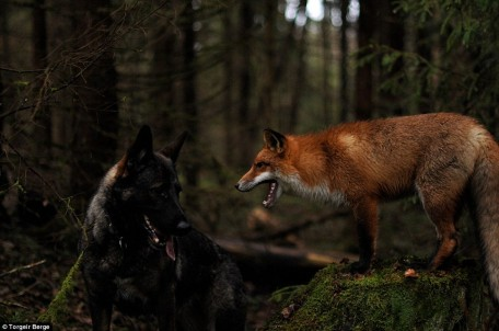 Fox and Hound