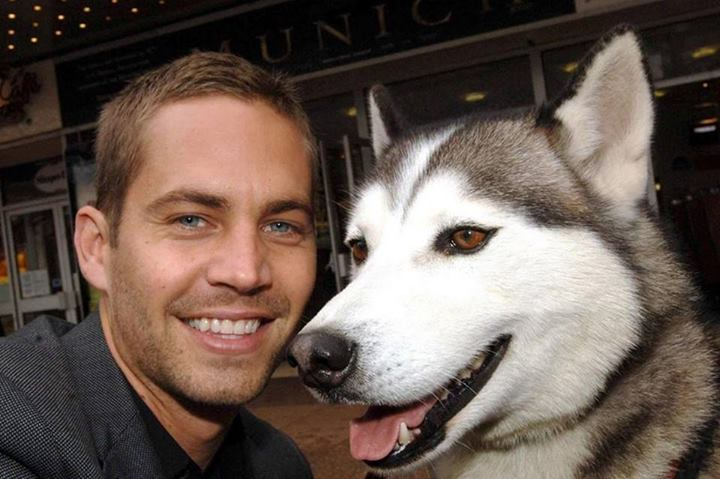 Paul Walker & siberian husky