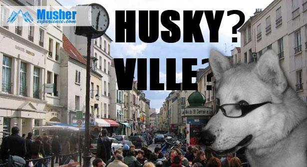 Husky en ville?