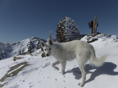 Galak à la neige