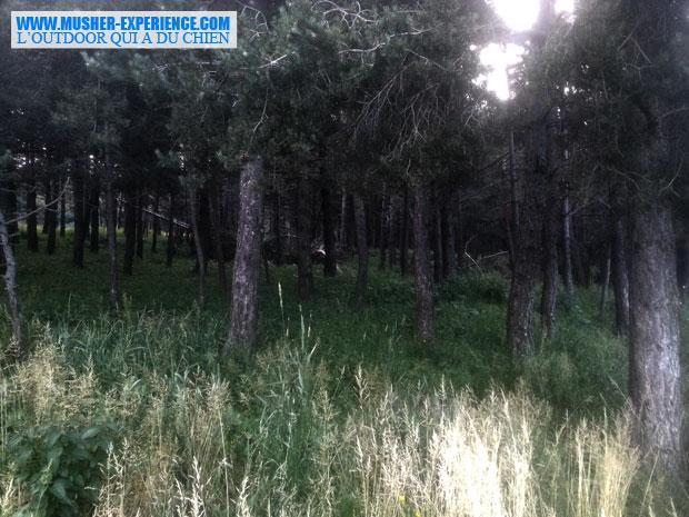 Forêt à Caille