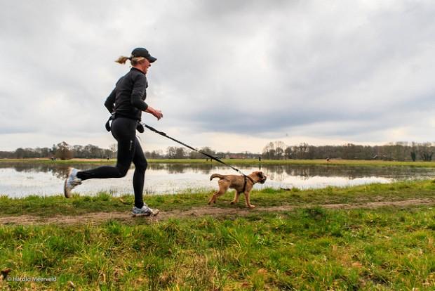 Apprendre à courir avec son chien
