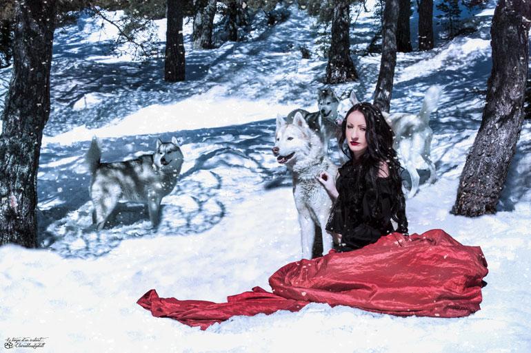 La magie du husky sibérien dans la neige