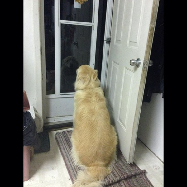 Dog-sitting-at-the-door