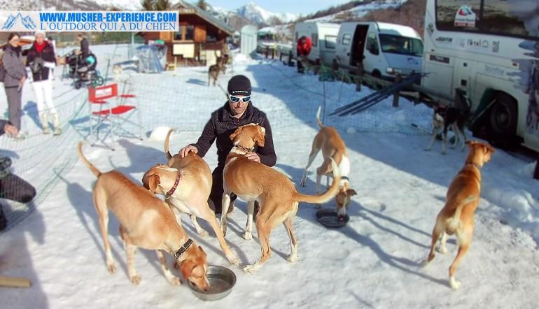 remy coste chien eurohound