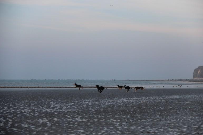 Balade des chiens en libre