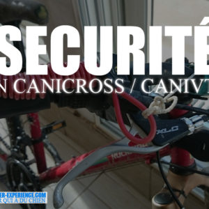 securite canivtt canicross