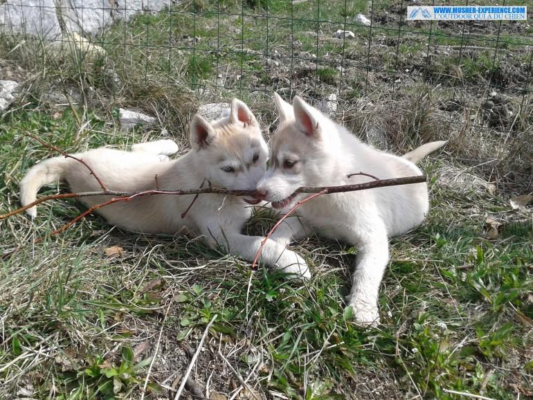 Joly bébé, avec sa soeur en train de jouer avec un baton dans le jardin