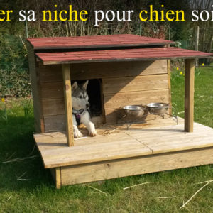 musher experience l 39 outdoor canin un chien des chiens. Black Bedroom Furniture Sets. Home Design Ideas