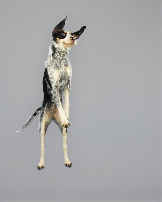 funny-jumping-dogs-series-12