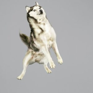 funny-jumping-dogs-series-13