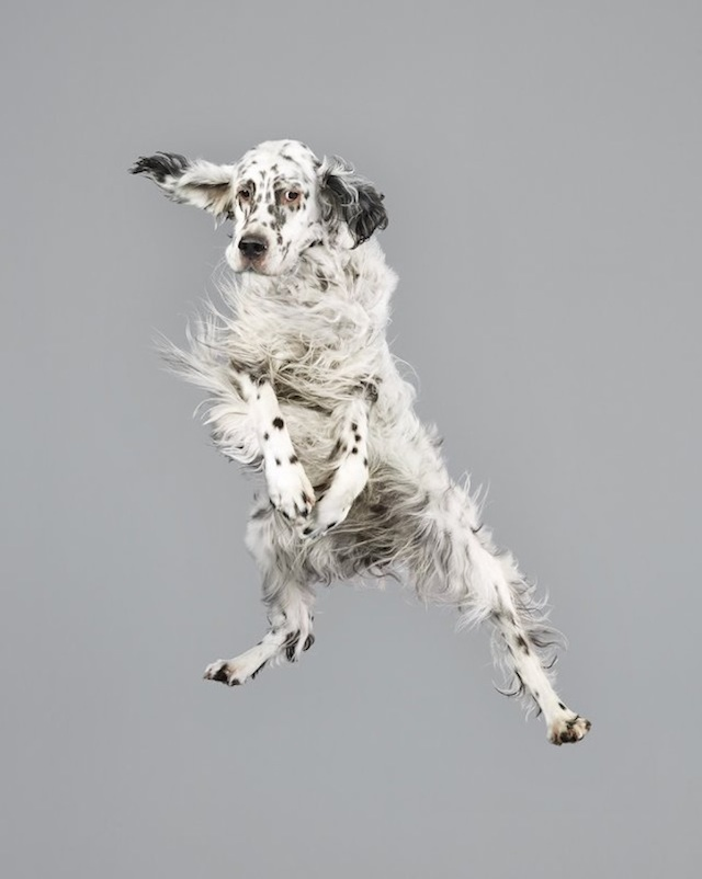 funny-jumping-dogs-series-6