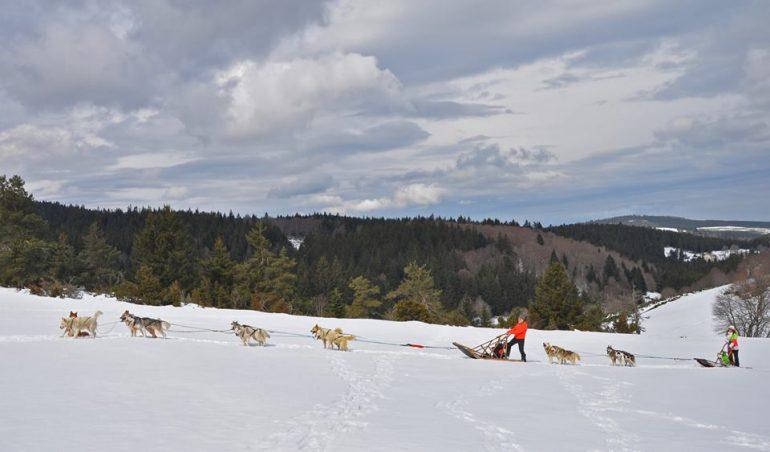 chien-de-traineau-2-attelages-dans-la-neige