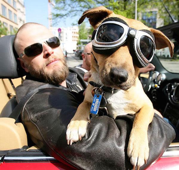 chien-biker-lunettes