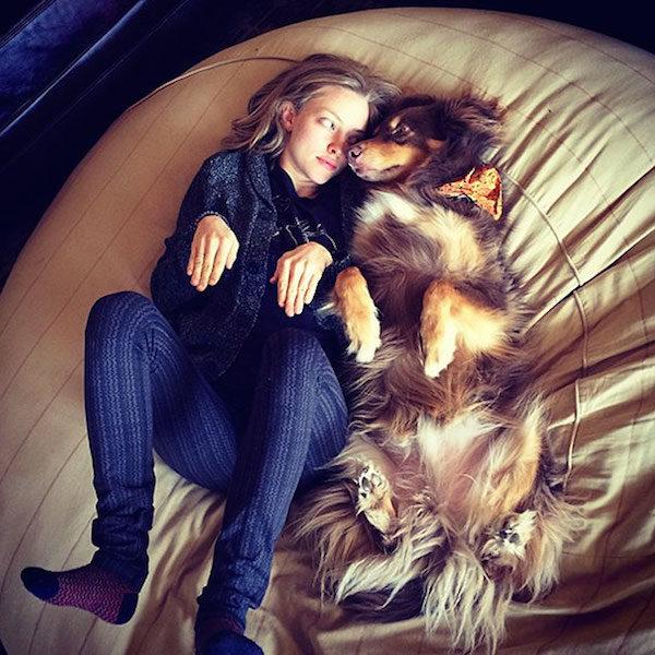 chien-pattes-en-lair-maitresse-lit