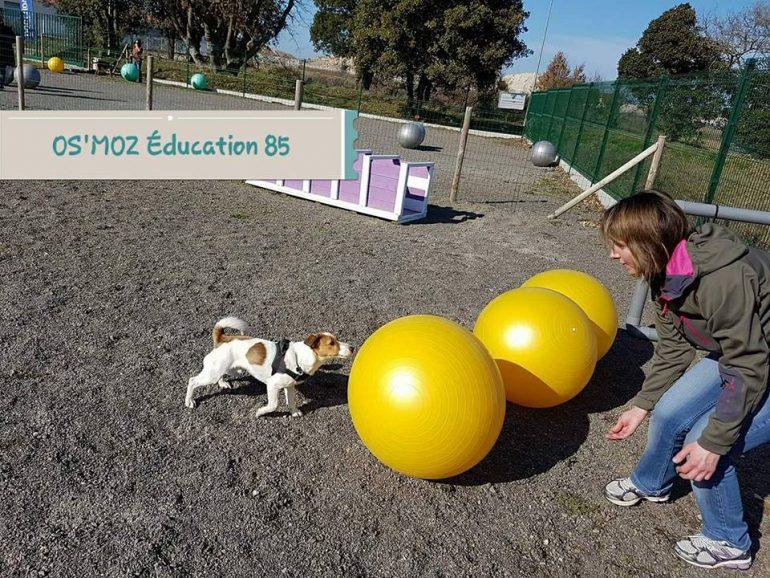 Activité avec son chien le Treibball