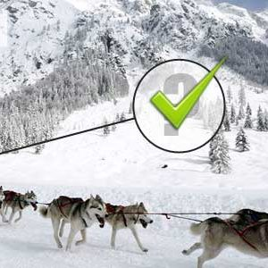 cohabitation chien b b conseils pour l arriv e d un nouveau n musher experience l 39 outdoor. Black Bedroom Furniture Sets. Home Design Ideas