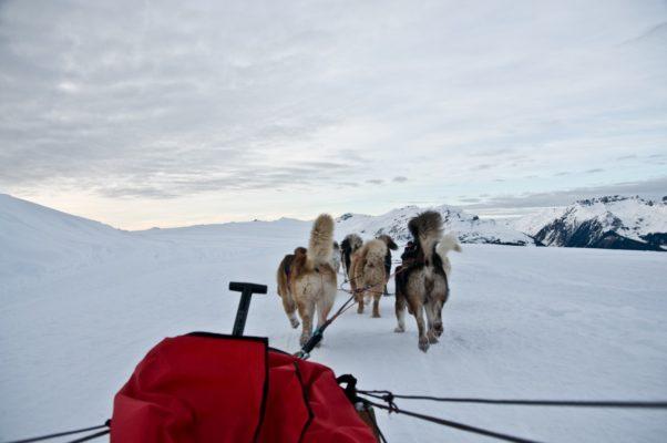 les 5 formes d'attelage de chiens de traineau dans le mushing