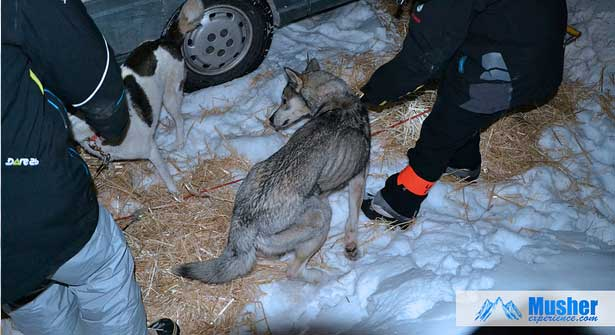 veto-lgo2013-musher