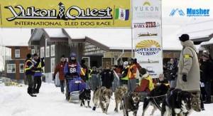 Yukon Quest 2013