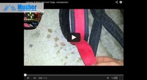 Comparaison des harnais de traction pour chien