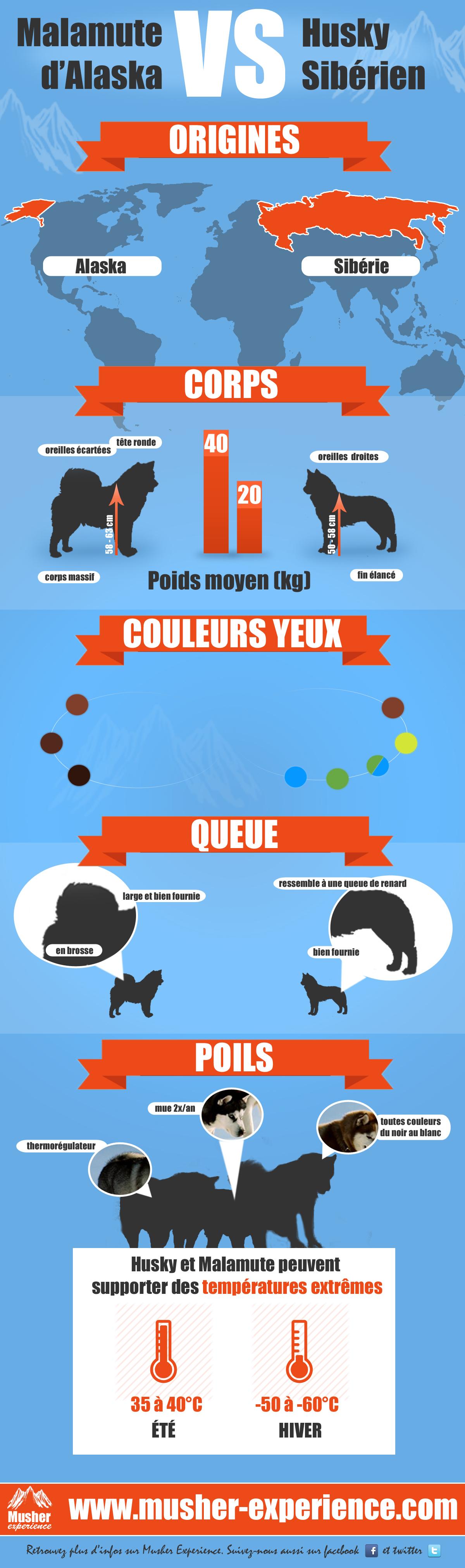 infographie malamute vs husky