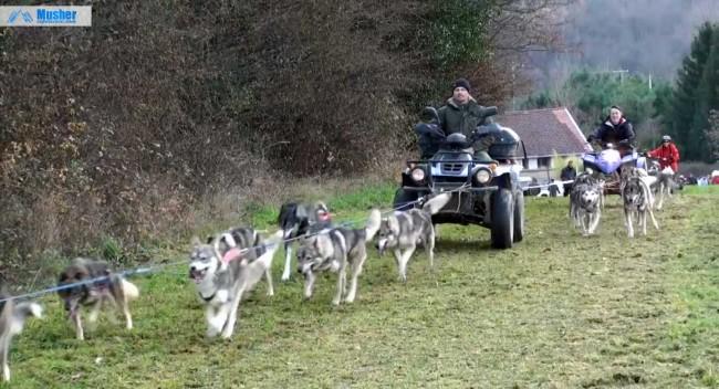 Week-end nordique : attelage chiens de traineau