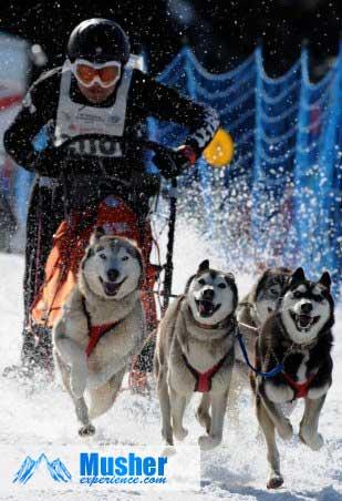 Sprint 4 chiens