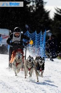 sprint-4-chiens