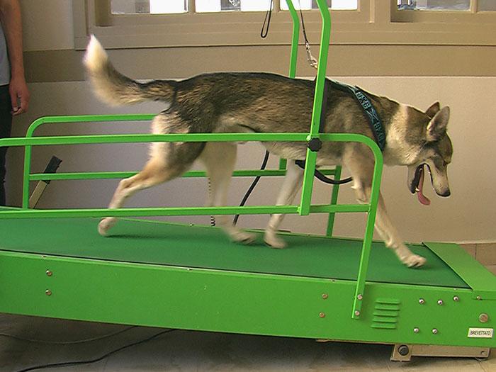 De la remise en forme pour les chiens