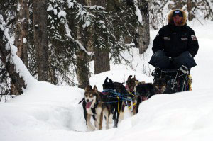 Coast-Guard-sponsored-Iditarod-musher-Ken-Anderson-exercises-members-of-his-sled-dog-team-maintaining-their-conditioning-in-preparation-for-the-Iditarod-Trail-Sled-Dog-Race-in-Knik-Alaska-Feb-29-2012