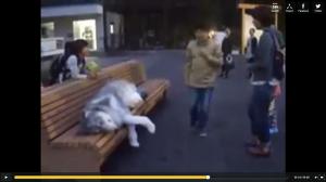 Loup sur un banc en ville