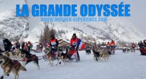 La Grande Odyssée, course internationale de chien de traineau