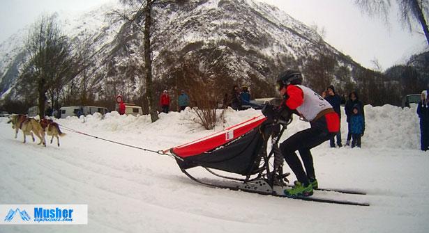 Sleddogs sprint, at Valgaude