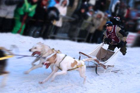 Course chien de traineau, Canada