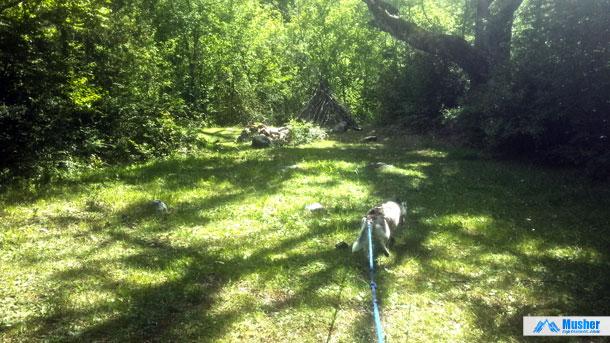 La cani-rando & le bushcraft