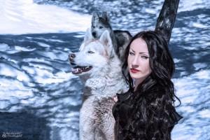 Husky dans la neige