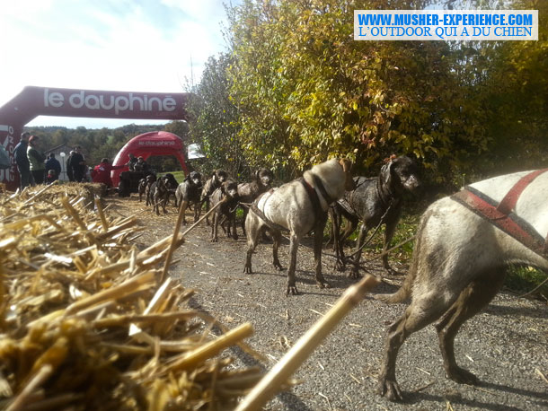 weekend-nordique-chien-chasse