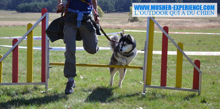Agility: activité avec son chien