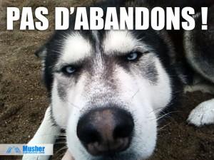 Non aux abandons de chiens !