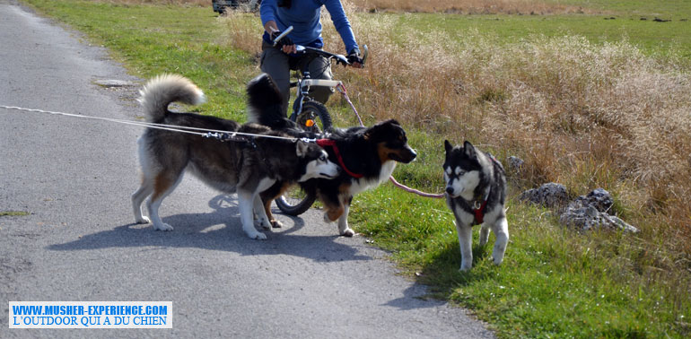 rencontre-chiens-vtt