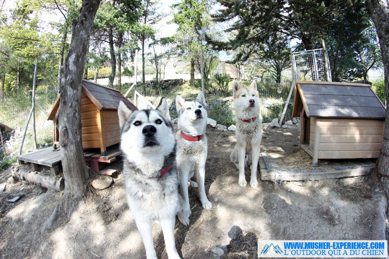 Les chiens attendent leur gamelle